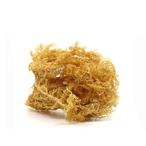 Wild Crafted Sea Moss - 1 oz seamoss - Pooka Pure and Simple