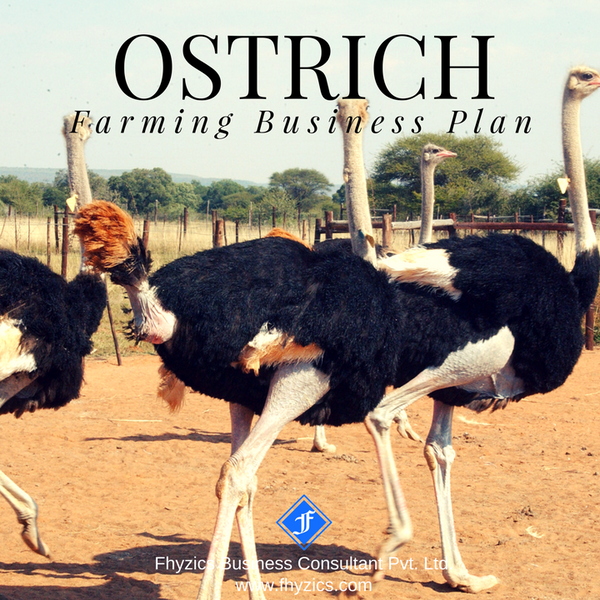 Ostrich-Farming-Business-Plan