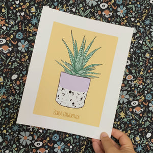 Houseplant Series: Zebra Haworthia