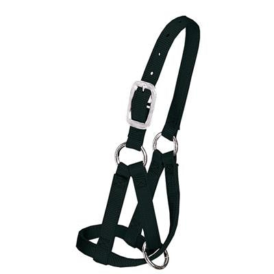 "Weaver Llama Halter, 3/4"" Medium/Large - 35-7086"