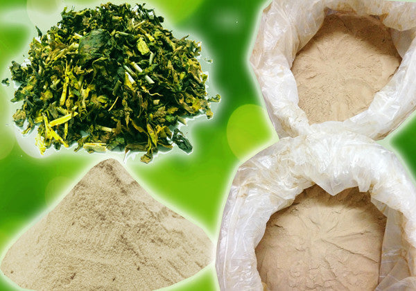 SSG Extract Powder & Dried Leaves
