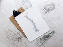 drawing of spine on a clip board