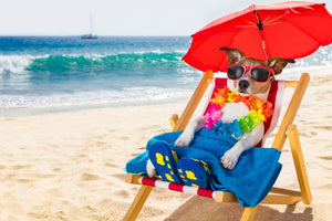 7 Summer Safety Tips for Dogs