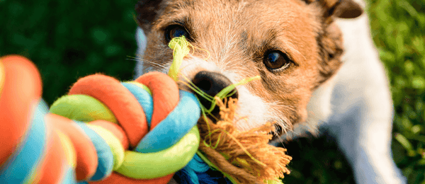 Are Pull Toys Safe For Dogs?