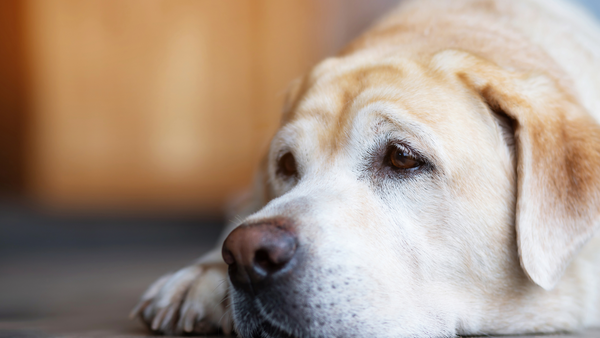 How to Help Dogs with Separation Anxiety