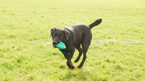 Willy & Dilly Rugby Balls