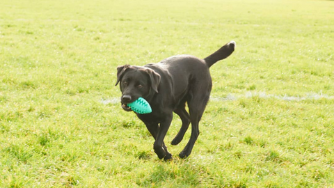 Willy & Dilly Rugby Ball