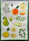 fantastic rollable wall chart picture pea fruits apple pear quince kitchen