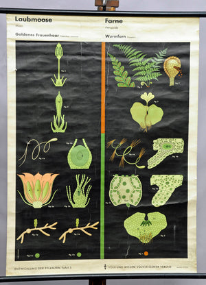 moss ferny green vintage poster print winter garden wall chart decoration