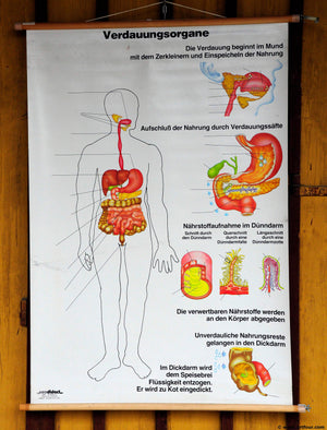 vintage pull-down wall chart poster print biology anatomy digestive organs