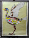 vintage pull-down picture wall chart vertebrata (aves) birds veterinary