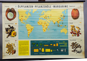 old vintage rollable wall chart map nutrition oil plant vegetable oils margarine