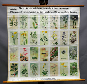 vintage picture poster wall chart protected wild growing plant species botany