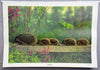 vintage rollable wall chart poster animals hedgehog Erinaceus europaeus family