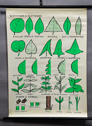 fantastic wall chart picture, botany, basic concepts of plants, leaf, stem