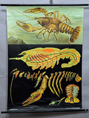 Jung Koch Quentell maritime decoration crayfish pull-down wall chart poster