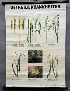 vintage pull down wall chart about crop diseases
