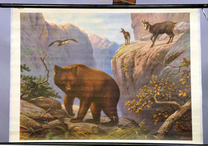 rollable wall chart animals Carpathian mountains bear chamois bird of prey