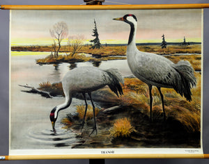 vintage rollable wall chart picture poster landscape birds crane ornithologist
