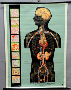 medical anthropology vintage pull-down poster wall chart human blood gland