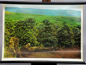 vintage photo poster coffee plantation estate Brazil rollable wall chart