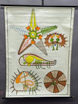 traditional rollable wall chart poster, animal, starfish, sea urchin, maritime