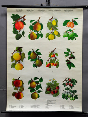 vintage rollable wall chart country style crops botany fruits berries apples