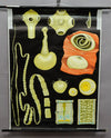 rollable wall chart poster pork tapeworm Taenia solium Jung Koch Quentell