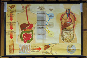 vintage poster rollable wall chart, our body, anatomy, digestion, nutrition
