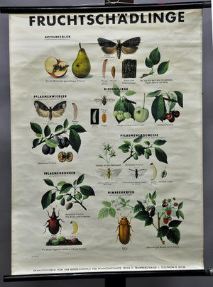 vintage rollable biological wall chart poster, botany, plants, fruit vermin