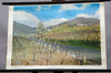 vintage poster rollable wall chart landscape at the wineyards grapevines