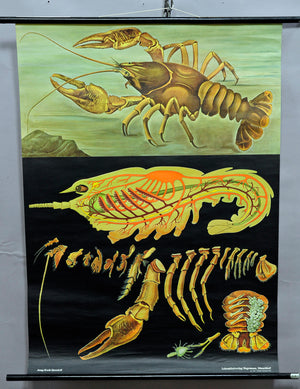 vintage pull-down Jung Koch Quentell wall chart crayfish poster martitime decor