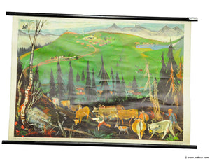 vintage poster pull-down wall chart cattle drive up to alpine pastures scenery