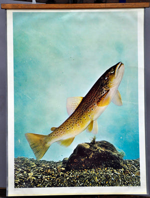 vintage poster print wall chart trout fish angler maritime decoration
