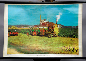 pull-down wall chart, Loess landscape, sugar factory, agriculture, farmer