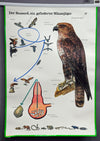 vintage rollable wall chart animal poster life of buzzard Buteo birds of prey