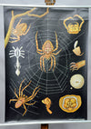 vintage Jung Koch Quentell wall chart common cross spider Araneus diadematus
