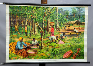 vintage rollable wall chart cocoa crop African Gold Coast landscape
