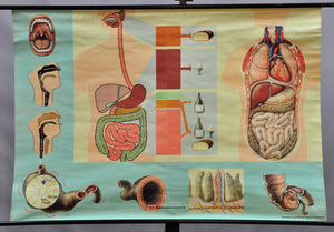 human body digestion nutrition diet consulting vintage anatomical poster