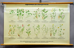 vintage poster wall chart legumes permanent grassland botany countrystyle