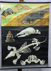 vintage rollable animal poster print mole Jung Koch Quentell wall chart