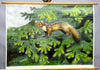 old vintage pull-down animal poster wall chart marten Mustelidae