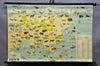 pull-down vintage wall chart animal poster map Asia wildlife kids room decor