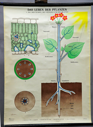 botany plants leaf root inflorescence poster wall chart colorful print