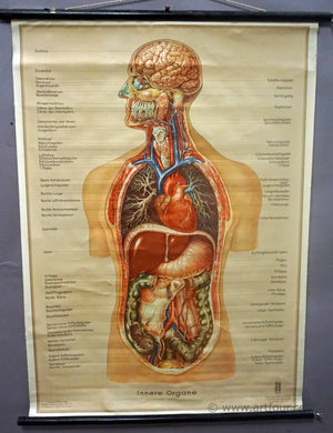 vintage pull down wall chart about the inner organs