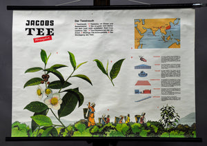 vintage pull-down poster rollable wall chart lantation plants tea processing