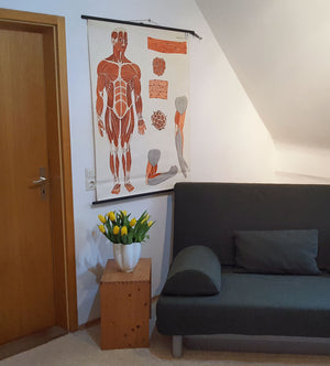 fantastic school wall chart picture, medicine, waiting room, human, musculature