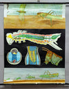 vintage Quentell wall chart picture poster, insects, green grasshopper, anatomy