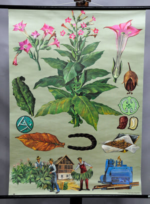 traditional rollable wall chart poster foreign crops botany plants flowers