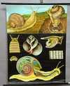 Jung Koch Quentell rollable vintage poster wall chart apple Burgundy Roman snail